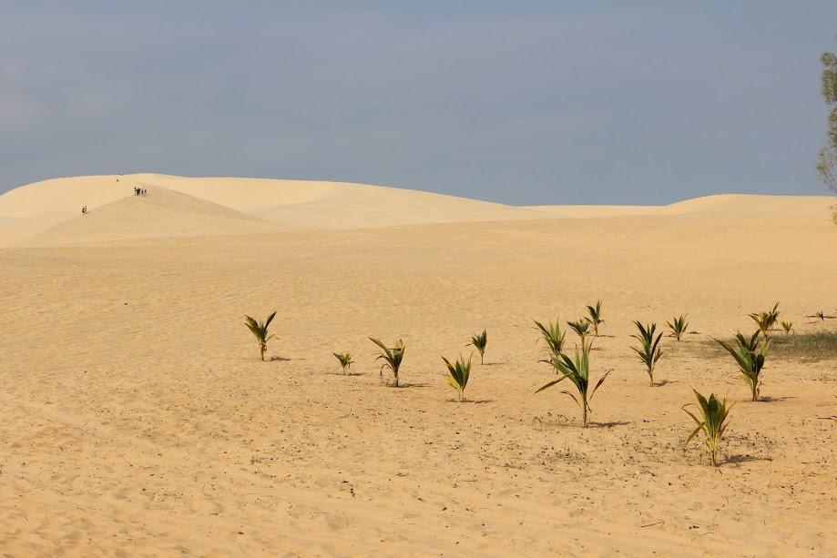 Muine-white-dune