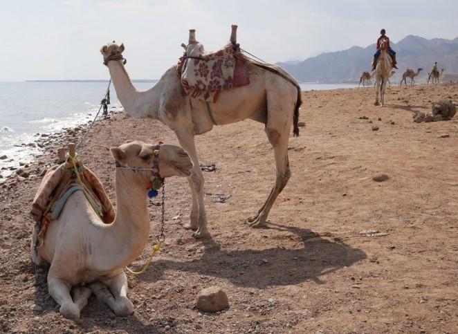 Экскурсия в Дахаб из Шарм-эль-Шейха