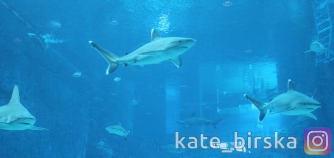 Акулы в океанариуме Сингапура