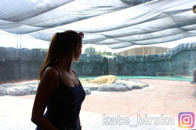 Белый медведь Инука