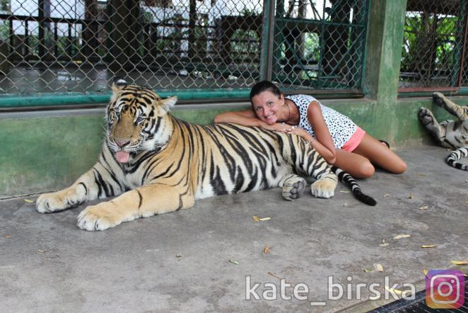 Королевство тигров, Пхукет, Таиланд