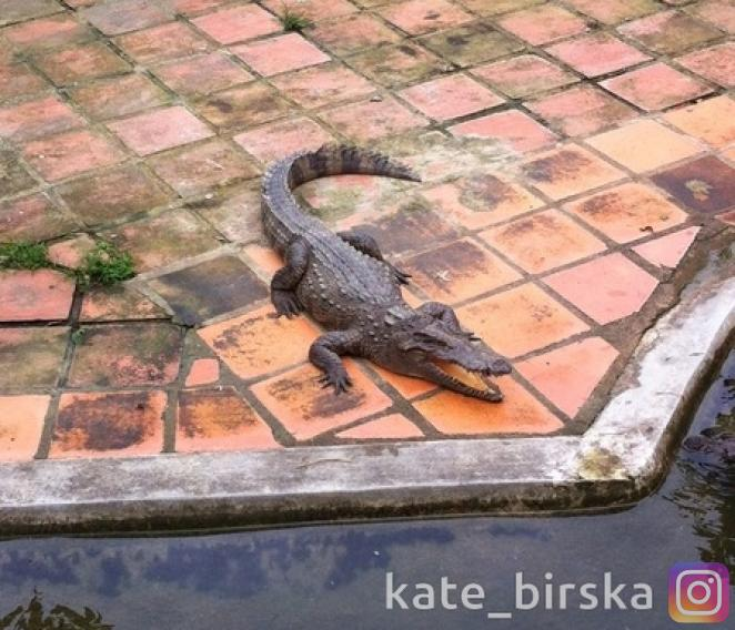 Спящий крокодил