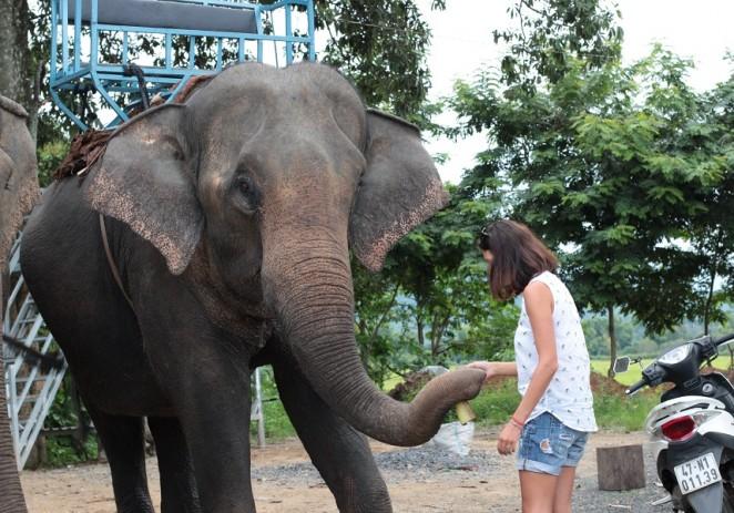 Слоны в Даклаке