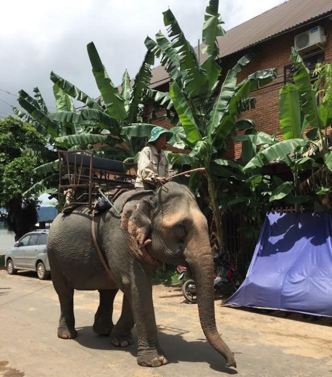 Слоны в Даклаке, Вьетнам