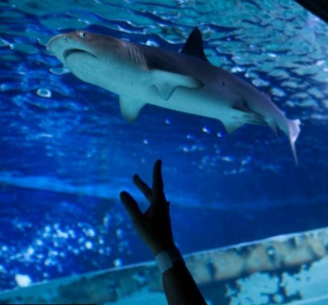 Акулы в океанариуме Манилы