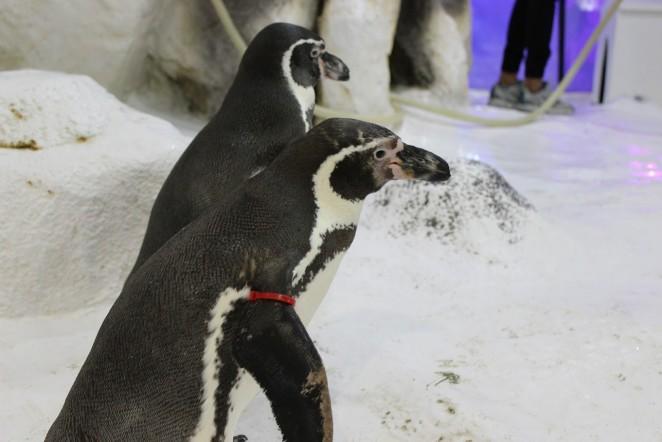 Пингвины в океанариуме Манилы