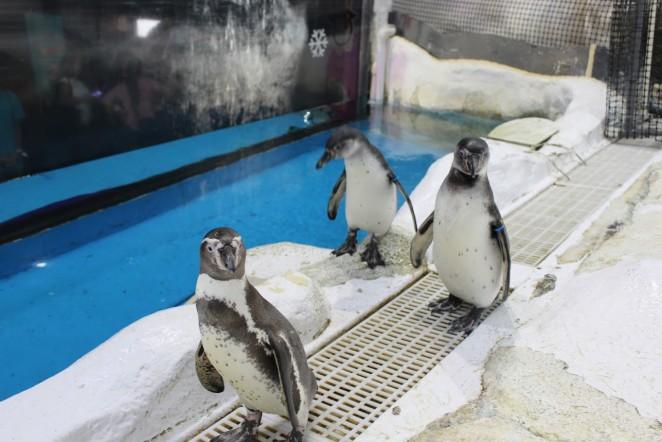 Пингвины, Манила, Филиппины
