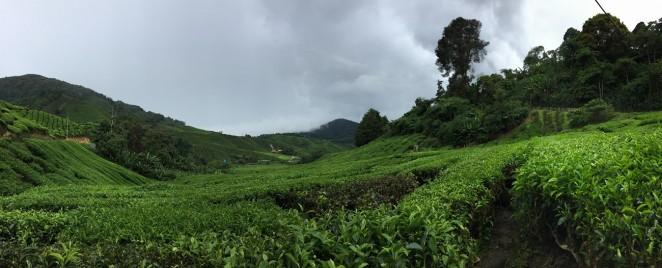 Чайный плантации BOH, панорама, Малайзия