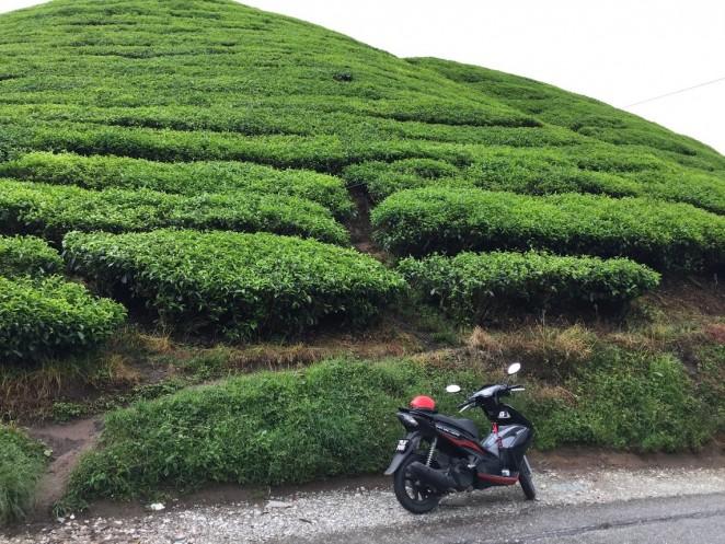 Чайный плантации BOH, Малайзия
