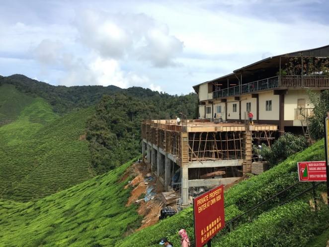 Чайные плантации, Камерон Хайлендс, Малайзия