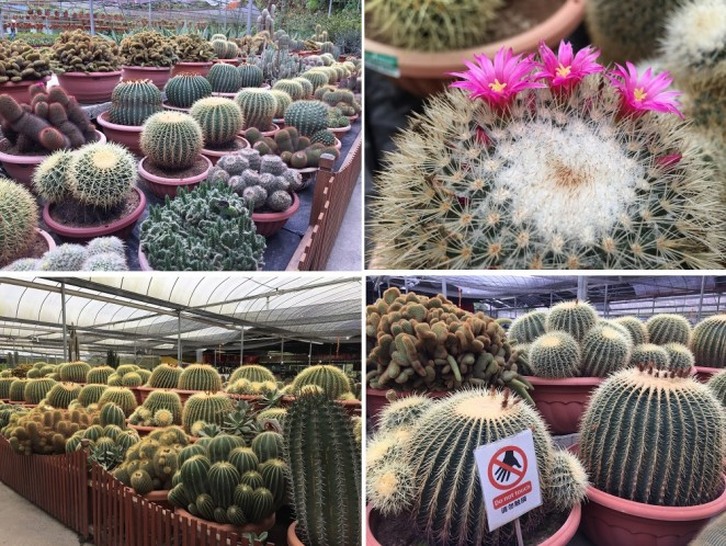 Камерон Хайлендс, ферма кактусов