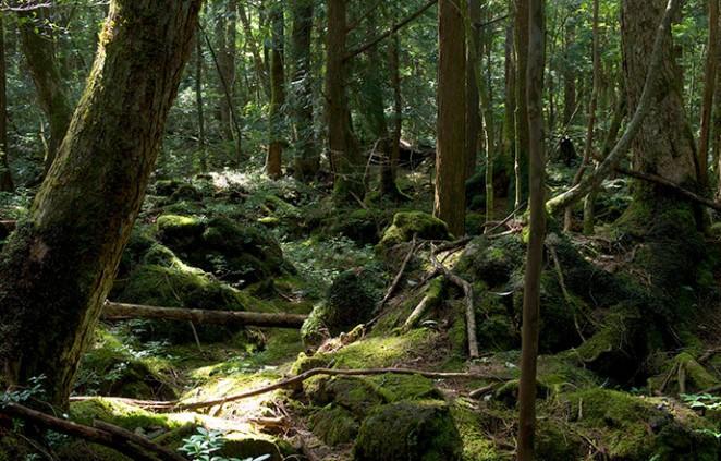 Лес самоубийц, Япония