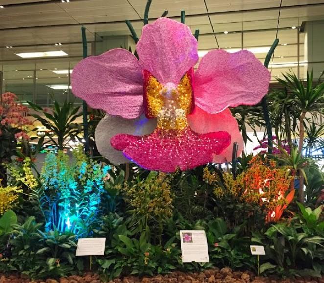 Сад орхидей, аэропорт Чанги, Сингапур