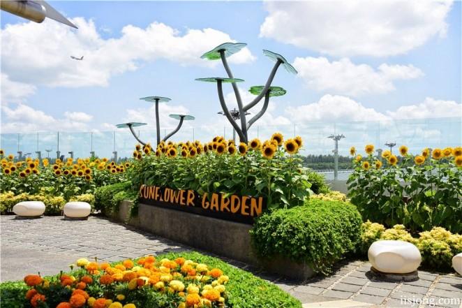 Сад подсолнухов, аэропорт Чанги, Сингапур