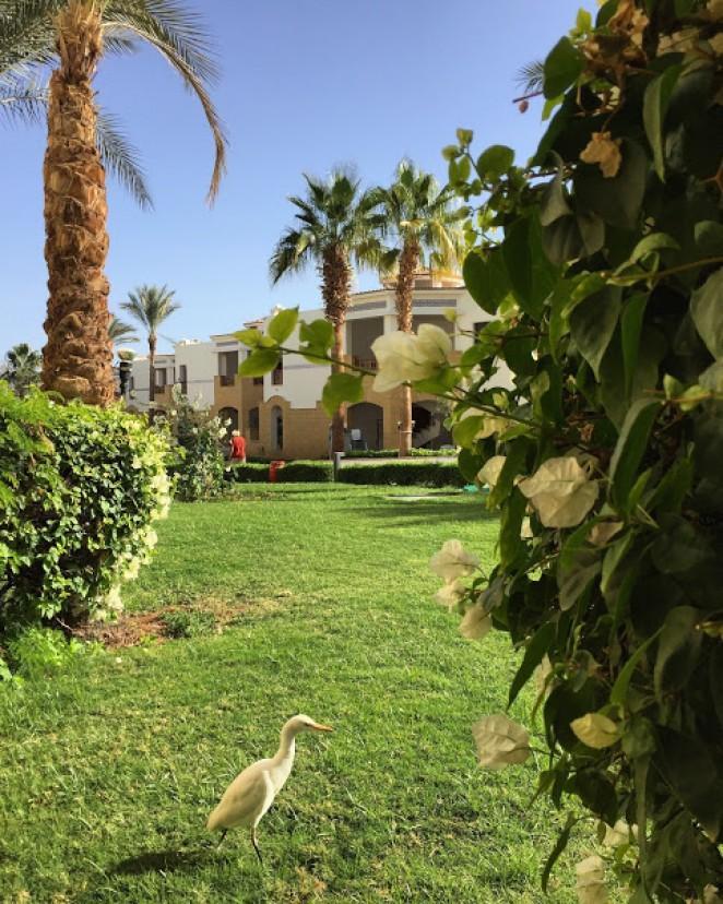 Вид из номера Otium Amphoras Hotel Sharm 5*