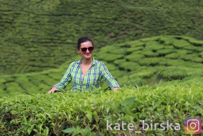 Чайные плантации в ЮВА