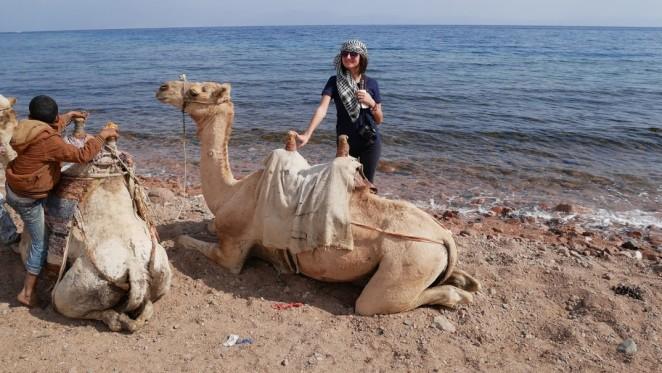 Дахаб, верблюды
