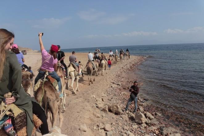 Вереница верблюдов в пустыне