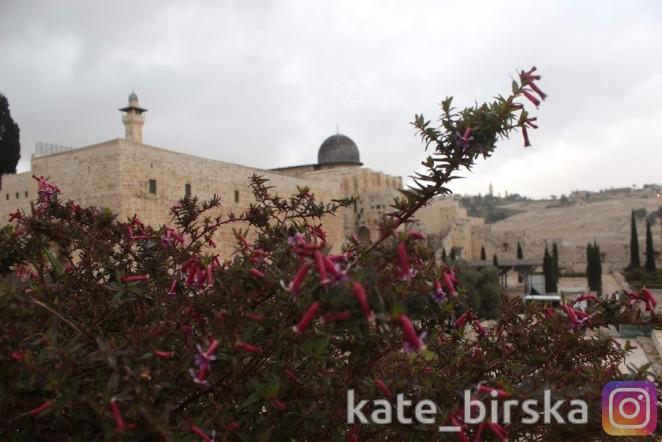 мечеть Эль-Масджид эль-Акса, Израиль