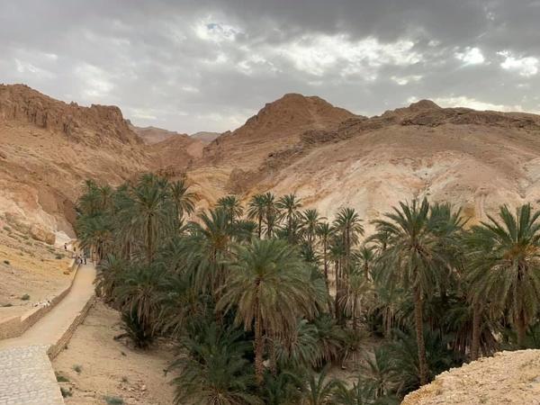 Экскурсии в Тунисе, оазис в Сахаре
