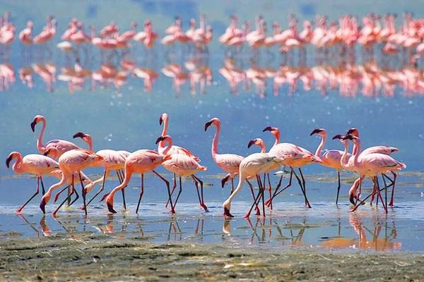 Фламинго на соленом озере, Ларнака